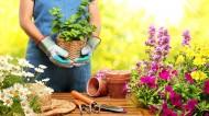 Garden leave or gardening leave