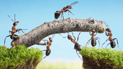 wpid-ants-working-together.jpg
