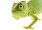 wpid-chameleon-85x60.jpg