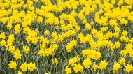 Spring brings with it the usual array of employment law changes