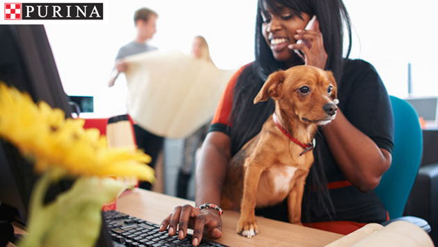 How having a dog-friendly office can help your business get ahead