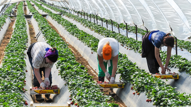 Farmers need clarity on 'vital' seasonal worker recruitment